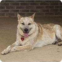Adopt A Pet :: Buppy - Brattleboro, VT