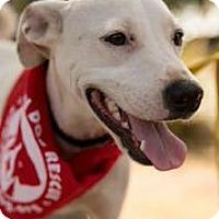 Adopt A Pet :: Gus - Austin, TX