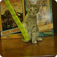 Adopt A Pet :: Angel - Ocala, FL