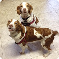 Adopt A Pet :: Rusty and Daisy - Buffalo, NY