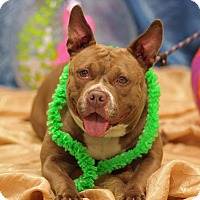 Adopt A Pet :: Miss K (foster care) - Philadelphia, PA