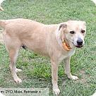 Adopt A Pet :: Aidan - Sherman, CT