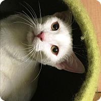 Adopt A Pet :: Rasha - Riverside, CA