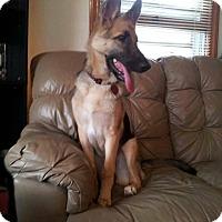 Adopt A Pet :: Athena - Greeneville, TN