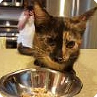 Adopt A Pet :: Guinevere - Berkeley Hts, NJ