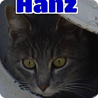 Adopt A Pet :: #83-3673 Hanz - foster GB - Lawrenceburg, KY