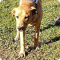 Adopt A Pet :: Ida - Sussex, NJ