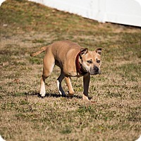 Adopt A Pet :: URGENT! FOSTER NEEDED! Mary Ka - Shrewsbury, NJ