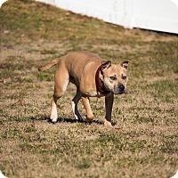 Adopt A Pet :: URGENT! FOSTER NEEDED! Mary Ka - Shrewsbury, NJ