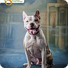 Adopt A Pet :: Gavin
