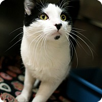 Adopt A Pet :: Bonner - Appleton, WI
