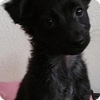 Adopt A Pet :: Misty - Stockton, CA