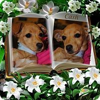 Adopt A Pet :: Cash - Crowley, LA