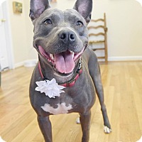 Adopt A Pet :: Zeva - Knoxville, TN