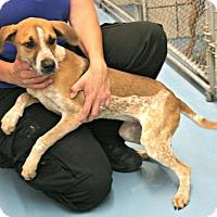 Adopt A Pet :: Lottie - Lufkin, TX
