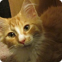 Adopt A Pet :: SENA - Acme, PA