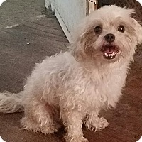 Adopt A Pet :: Carmen - Detroit, MI