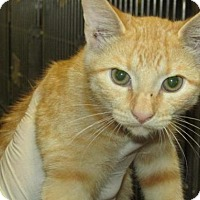 Adopt A Pet :: Cat N005 - Rocky Mount, NC