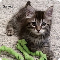 Adopt A Pet :: Garrett - Portland, OR