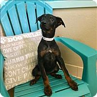 Adopt A Pet :: Winifred - Riverside, CA