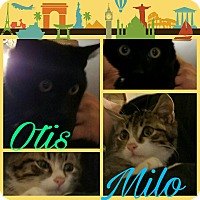 Adopt A Pet :: Otis & Milo - Randolph, NJ