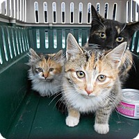 Adopt A Pet :: Ariel & Erin - Clay, NY