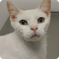 Adopt A Pet :: Mungo - Springfield, IL