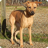 Adopt A Pet :: Axel - Newport, NC