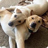 Adopt A Pet :: Koda & Bear - Torrance, CA