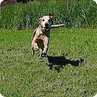 Adopt A Pet :: Custer - Bakersville, NC