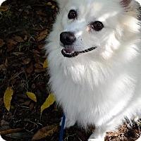 Adopt A Pet :: Kuma of FL - Bradenton, FL