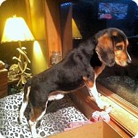 Adopt A Pet :: Renny - Novi, MI