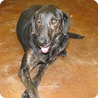 Adopt A Pet :: JIPP - Charlemont, MA