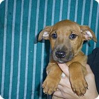 Adopt A Pet :: Rainy - Oviedo, FL