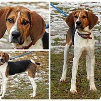 Adopt A Pet :: Freddy - Bardonia, NY
