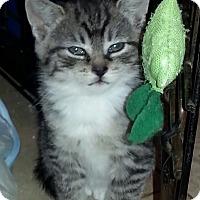 Adopt A Pet :: Rain - River Edge, NJ