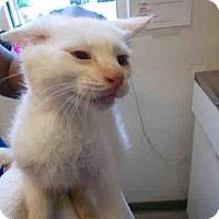 Adopt A Pet :: *THEO - Upper Marlboro, MD