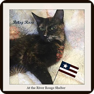 Domestic Shorthair Cat for adoption in River Rouge, Michigan - Betsy Ross