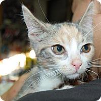 Adopt A Pet :: Heather - Brooklyn, NY