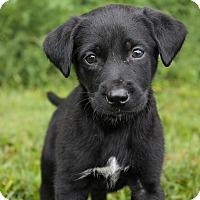Adopt A Pet :: Monty - Milford, NJ
