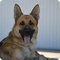 German Shepherd Dog Dog for adoption in San Diego, California - Milo