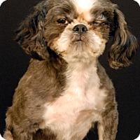 Adopt A Pet :: Indiana - Newland, NC
