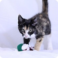 Adopt A Pet :: Mallie - Murfreesboro, NC