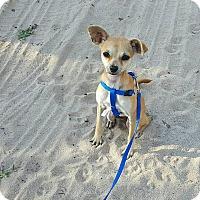 Adopt A Pet :: Parker - San Antonio, TX