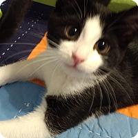 Adopt A Pet :: Michael Angelo - Ortonville, MI