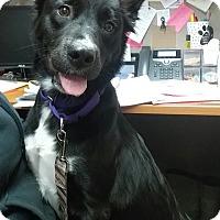 Adopt A Pet :: Marley - Lisbon, OH