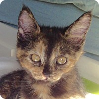 Adopt A Pet :: A..  Kaitlyn - Mooresville, NC
