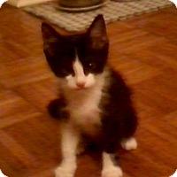 Adopt A Pet :: Hobo - West Palm Beach, FL