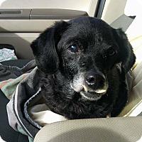 Adopt A Pet :: Merry - Newport, KY