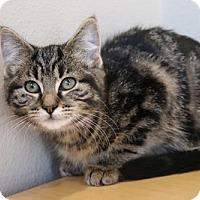 Adopt A Pet :: Molly - Wenatchee, WA